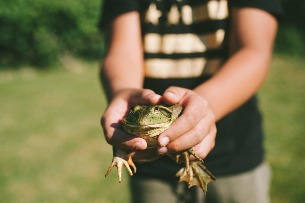 boy holding frog by sharalee prang of sharable prang photography for childhood unplugged july